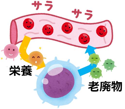 体液は、細胞に栄養を与えて老廃物を回収します