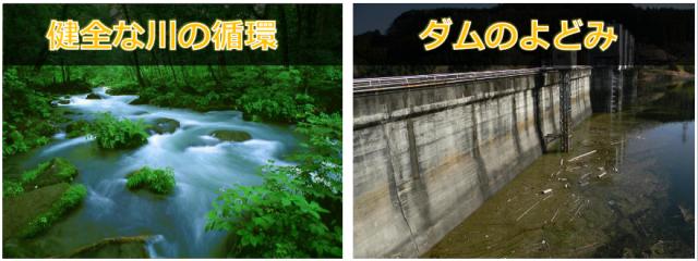 清流は常に流れ、森の養分を運びます。ダムはせき止め、そこで森の生命力はたたれます