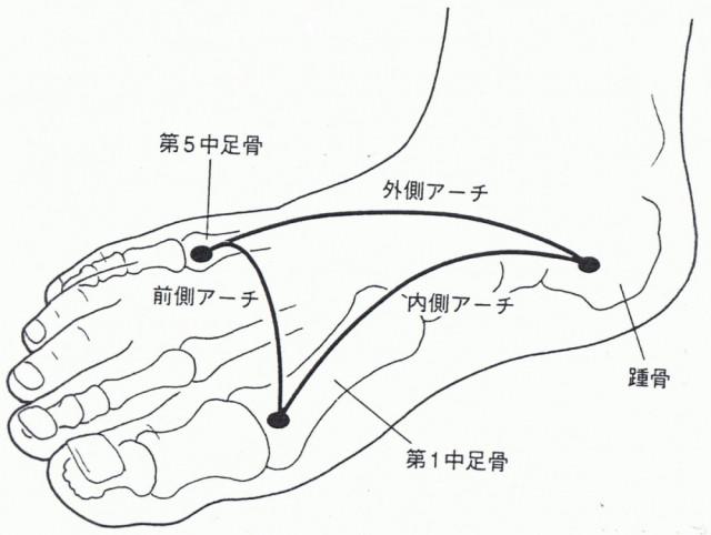 足のアーチ構造